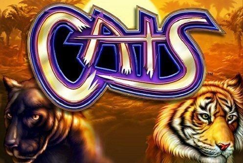 Cats är ett spel som handlar om kattdjur